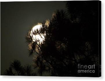 Moon In The Pines Canvas Print by Lynda Dawson-Youngclaus