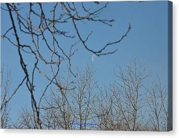 Moon On Treetop Canvas Print by Sonali Gangane