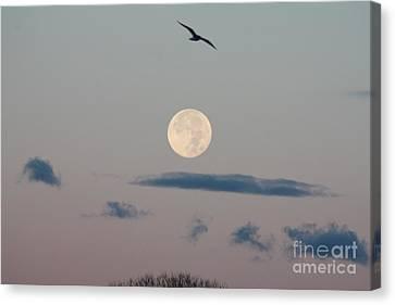 Moon Setting Over Oceanside Canvas Print by John Telfer