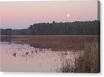 Moonrise Over Waterfowl Pond Canvas Print by John Burk