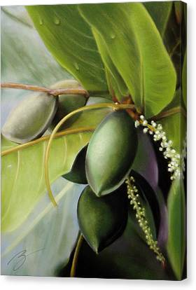 Morning Almonds Pastel Canvas Print by Ben Kotyuk