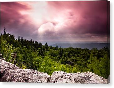 Morning At Dolly Sods Canvas Print by Shane Holsclaw