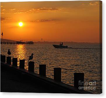 Morning Catch Canvas Print by Daniel Diaz