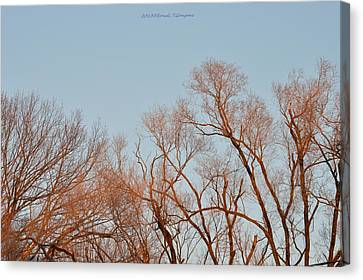 Morning Coloured In Fall Canvas Print by Sonali Gangane
