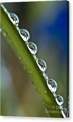 Morning Dew Drops 2 Canvas Print by Heiko Koehrer-Wagner
