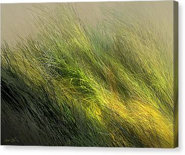 Morning Dew Drops Canvas Print by Aaron Blaise