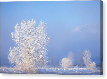Morning Frost Canvas Print by Darren  White