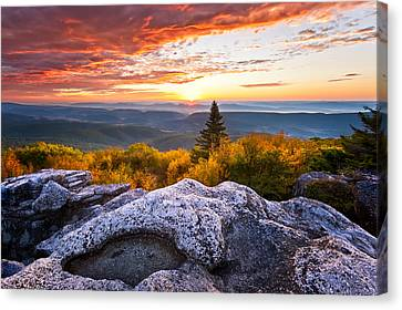 Morning Glory Canvas Print by Bernard Chen