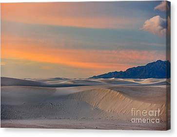 Morning Glory In White Sands Canvas Print by Sandra Bronstein