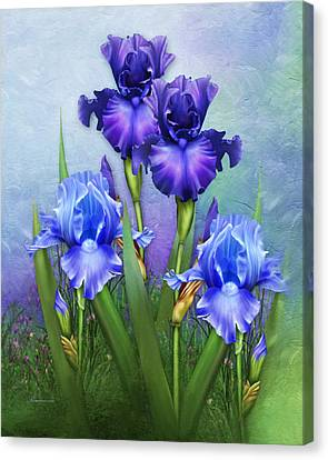 Morning Glory Canvas Print by Georgiana Romanovna