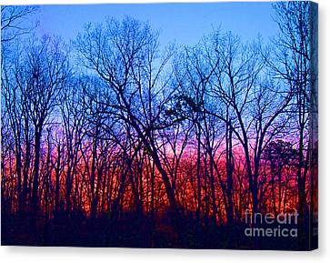 Morning Has Broken Canvas Print by Marian DeSalvo-Rodgers