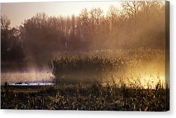 Morning Light Canvas Print by Skip Willits