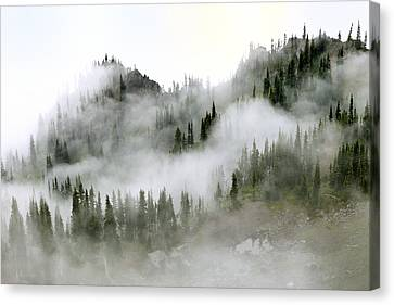 Morning Mist In Olympic National Park Canvas Print by King Wu