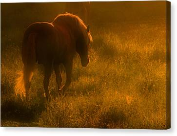 Morning Stroll Canvas Print by Jim Vance