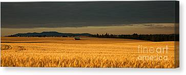 Morning's Glow Canvas Print by Beve Brown-Clark Photography