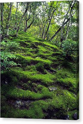 Moss Forest In Kyoto Japan Canvas Print by Daniel Hagerman