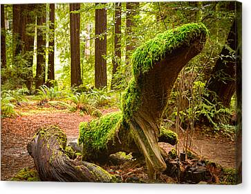 Mossy Creature Canvas Print by Bryant Coffey