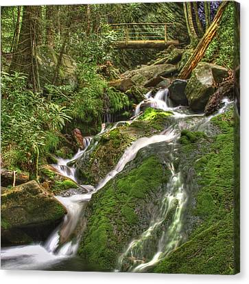 Mossy Creek Canvas Print by Debra and Dave Vanderlaan