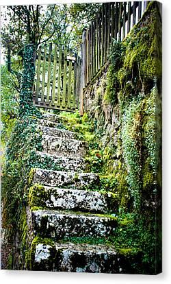 Mossy Stairs Canvas Print by David Waldo