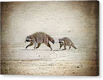 Mother And Baby Raccoon Canvas Print by Peggy Collins