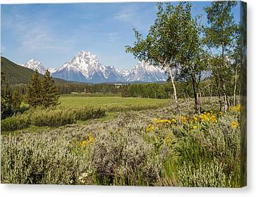 Mount Moran View Canvas Print by Brian Harig