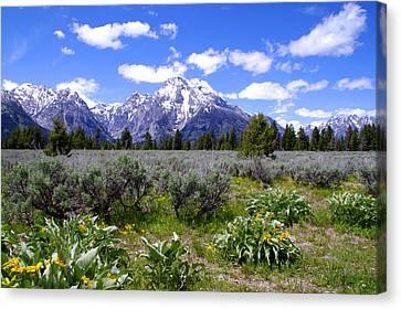 Mount Moran Wildflowers Canvas Print by Brian Harig