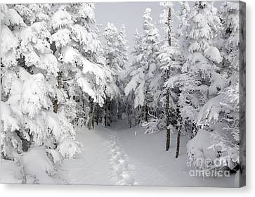Mount Osceola Trail - White Mountains New Hampshire Canvas Print by Erin Paul Donovan