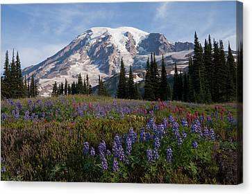 Mount Rainier National Park, Mount Canvas Print by Ken Archer