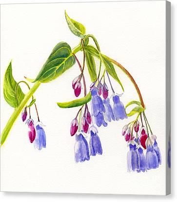 Mountain Bluebells Canvas Print by Sharon Freeman