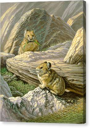 Mountain Haymakers - Pika Canvas Print by Paul Krapf