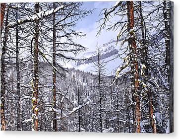 Mountain Landscape Canvas Print by Elena Elisseeva