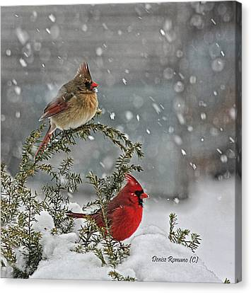 Mr. And Mrs. Cardinal Canvas Print by Denise Romano