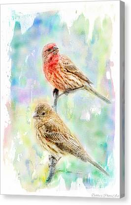 Mr And Mrs House Finch - Digital Paint Canvas Print by Debbie Portwood