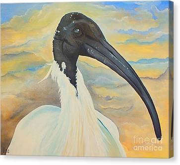 Mr Ibis Canvas Print by Una  Miller