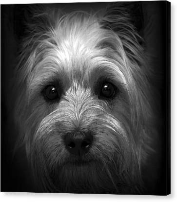 Mr. Watson Canvas Print by Tom Bell