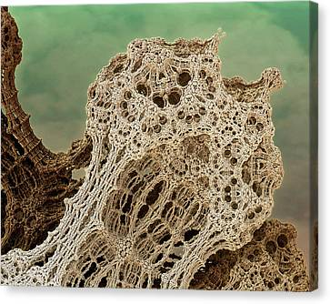 Mud Hive Canvas Print by Kevin Trow