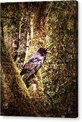 Muir Woods Raven 002 Canvas Print by Lance Vaughn