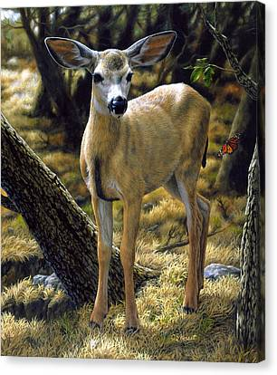 Mule Deer Fawn - Monarch Moment Canvas Print by Crista Forest