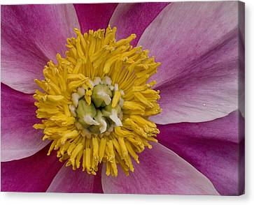 Mum Is The Word Canvas Print by Susan Candelario