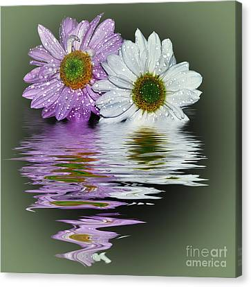 Mums Reflecting Canvas Print by Kaye Menner
