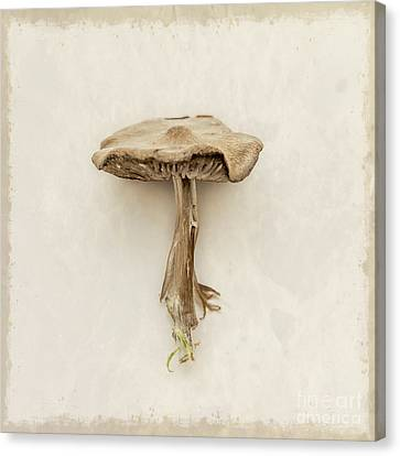 Mushroom Canvas Print by Lucid Mood