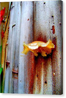Mushroom On Bamboo Canvas Print by Lyle Barker