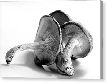 Mushrooms Canvas Print by Susie DeZarn
