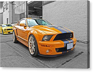 Mustang Alley Canvas Print by Gill Billington