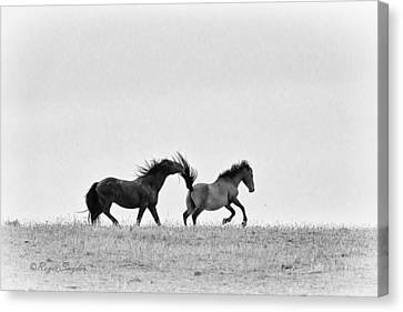 Mustangs Sparring 2 Canvas Print by Roger Snyder