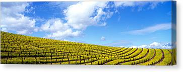 Mustard Fields, Napa Valley Canvas Print by Panoramic Images