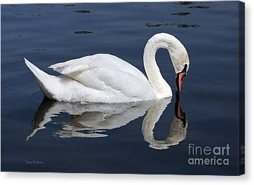 Mute Swan Kissing Its Reflection Canvas Print by Susan Wiedmann