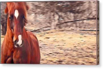 My Fine Friend The Flashy Chestnut Stallion Canvas Print by Patricia Keller