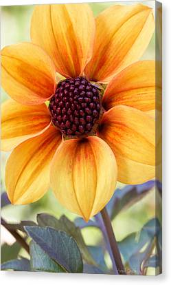 My Sunshine Canvas Print by Heidi Smith