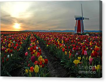 My Touch Of Holland Canvas Print by Nick  Boren